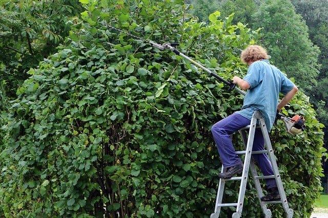 Entretien des espaces verts pour entreprise
